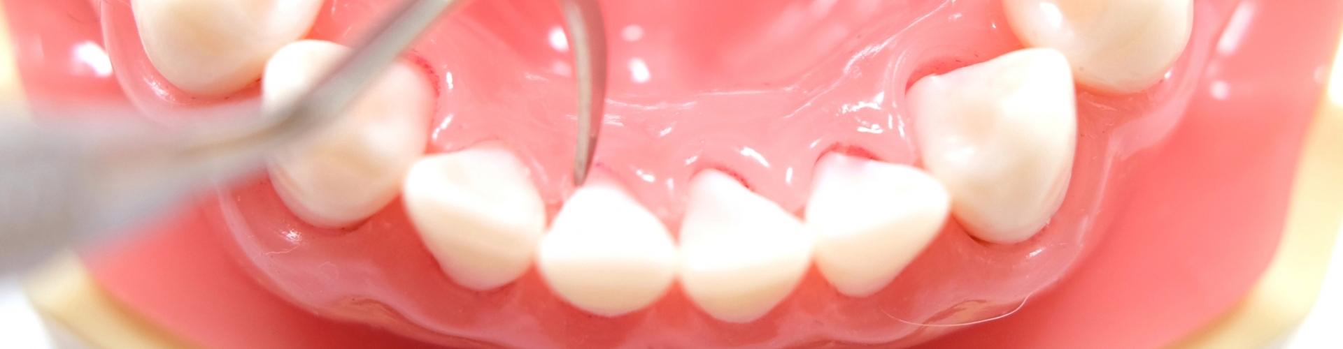 口腔解剖学